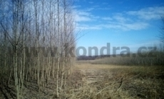 palivove-drevo_result