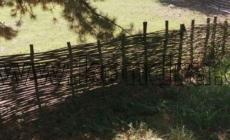 vrbove-pruty