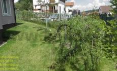 zivy-plot-z-vrby